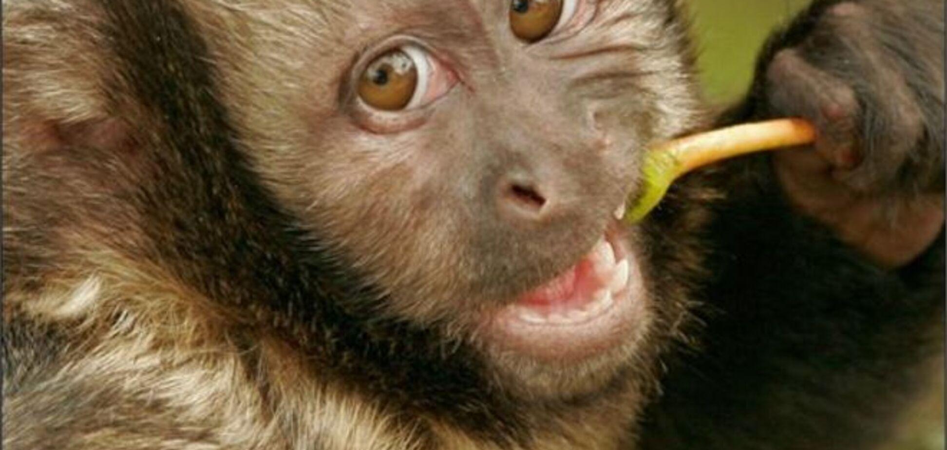Мавп, які захопили літак в 'Борисполі', запроторили за грати