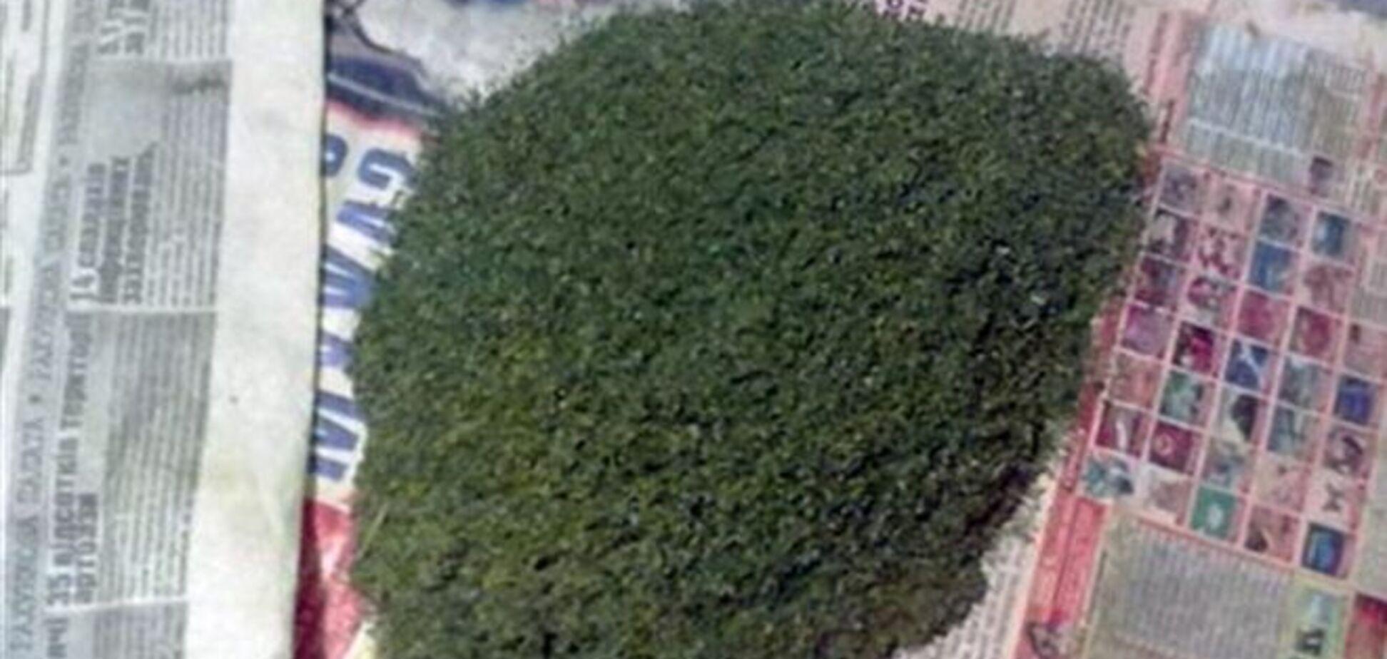 У Полтаві у 17-річного хлопця знайшли 3 кг марихуани