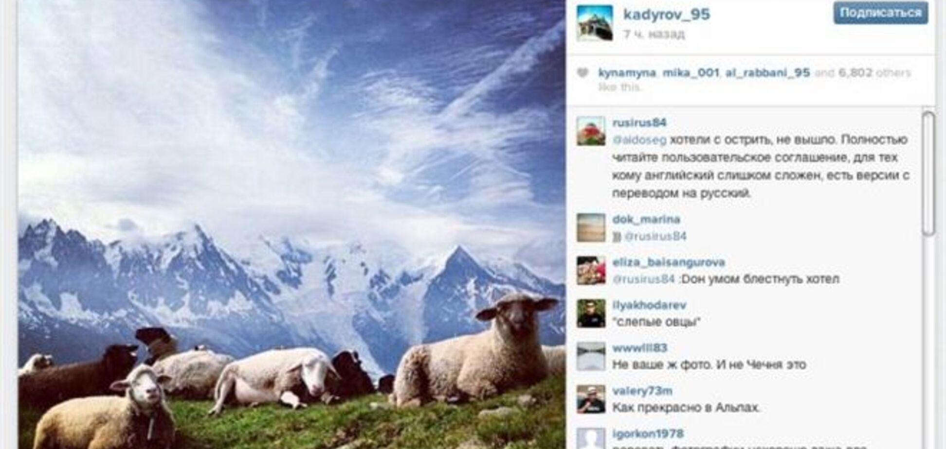 Президент Чечни вляпался в скандал с овцами