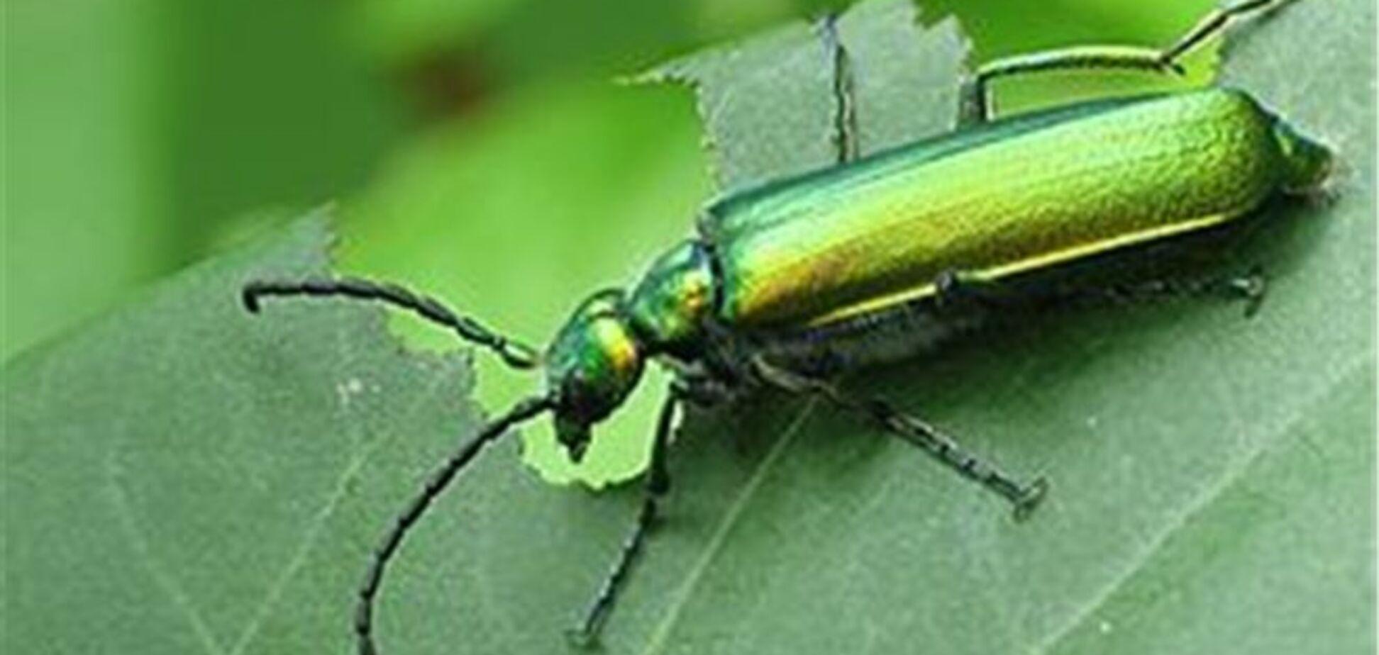 Дівчину примусили до груповій оргії з незнайомцями за допомогою зеленого жука