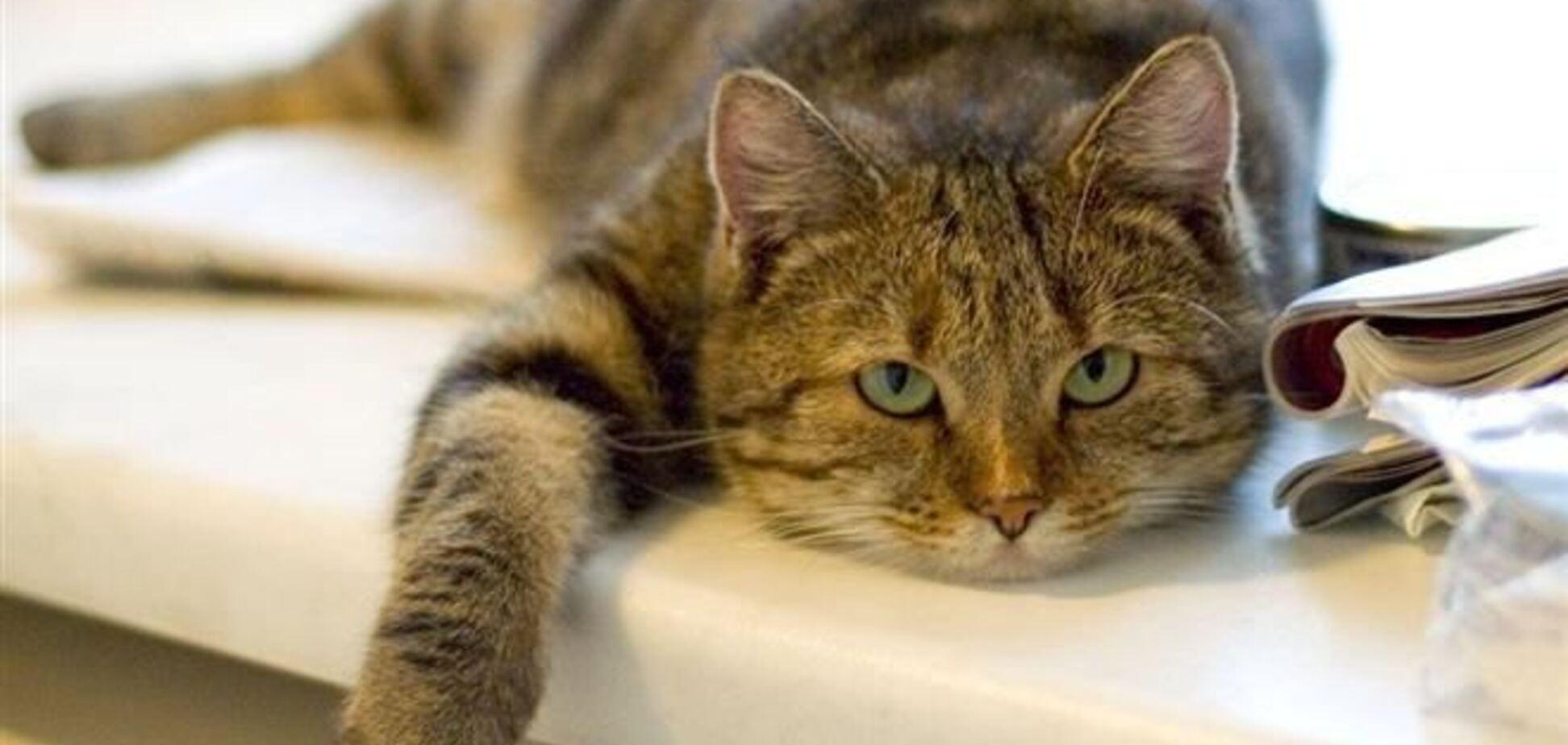 Какими продуктами нельзя кормить кота