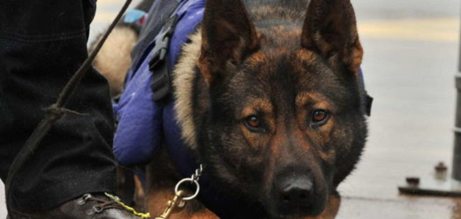 В Одессе милицейская собака вынюхала ничейную сумку с арсеналом оружия