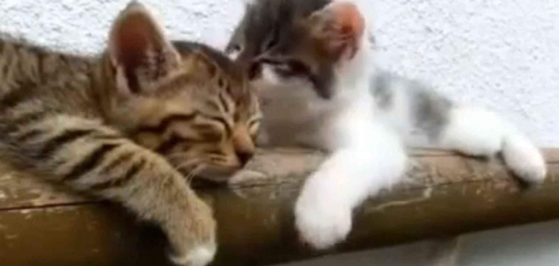 Интернет рыдает: гиперактивный котенок будит братика-соню
