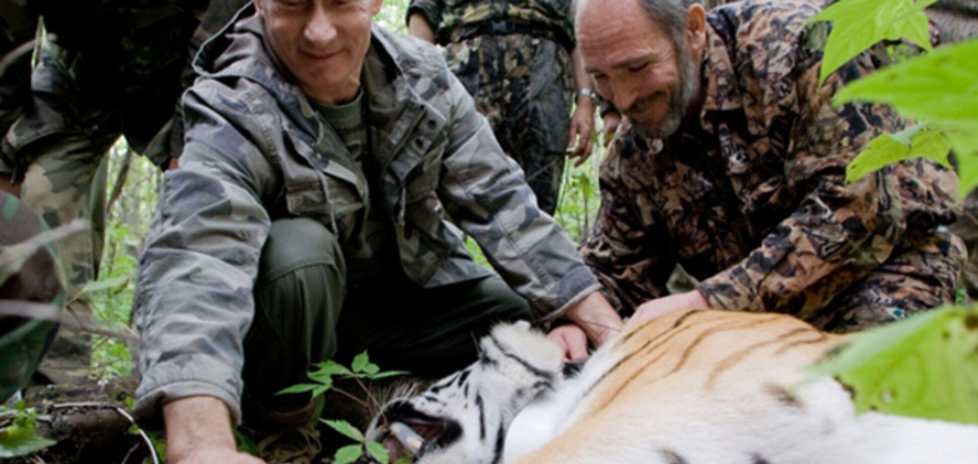 Выпущенный Путиным амурский тигр Кузя сбежал в Китай