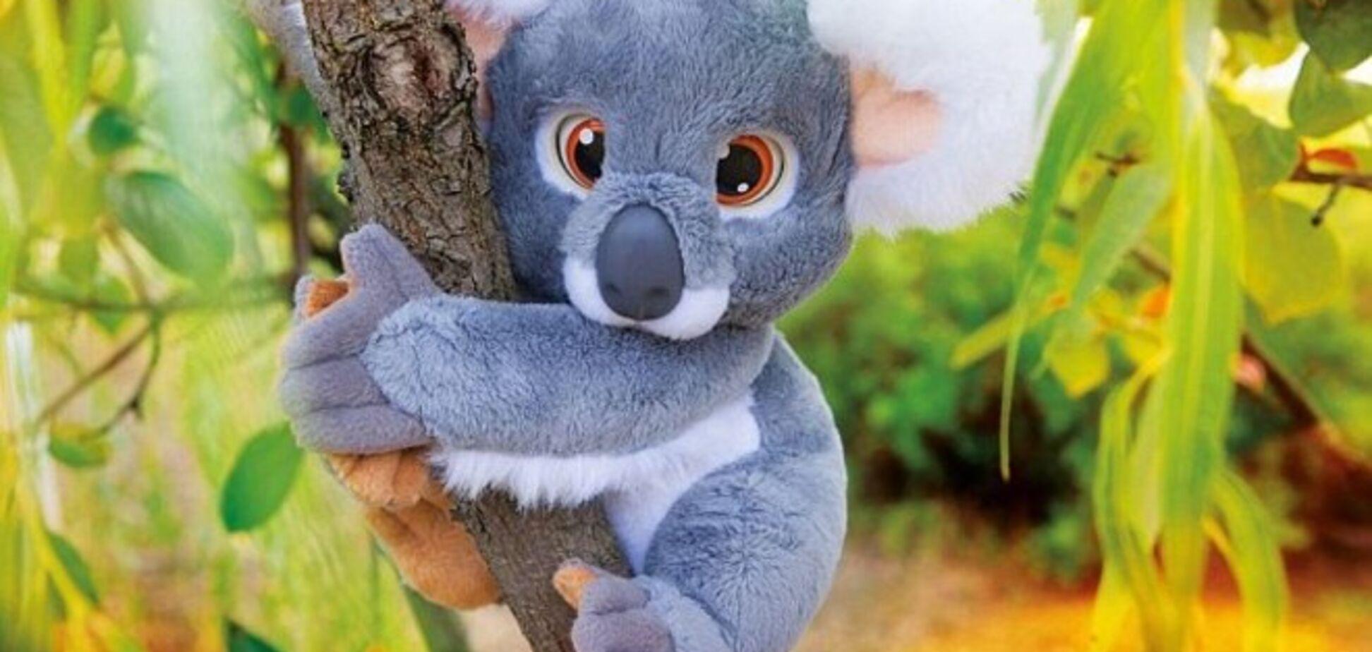 Эмоциональная коала обматерила трехлетнюю девочку