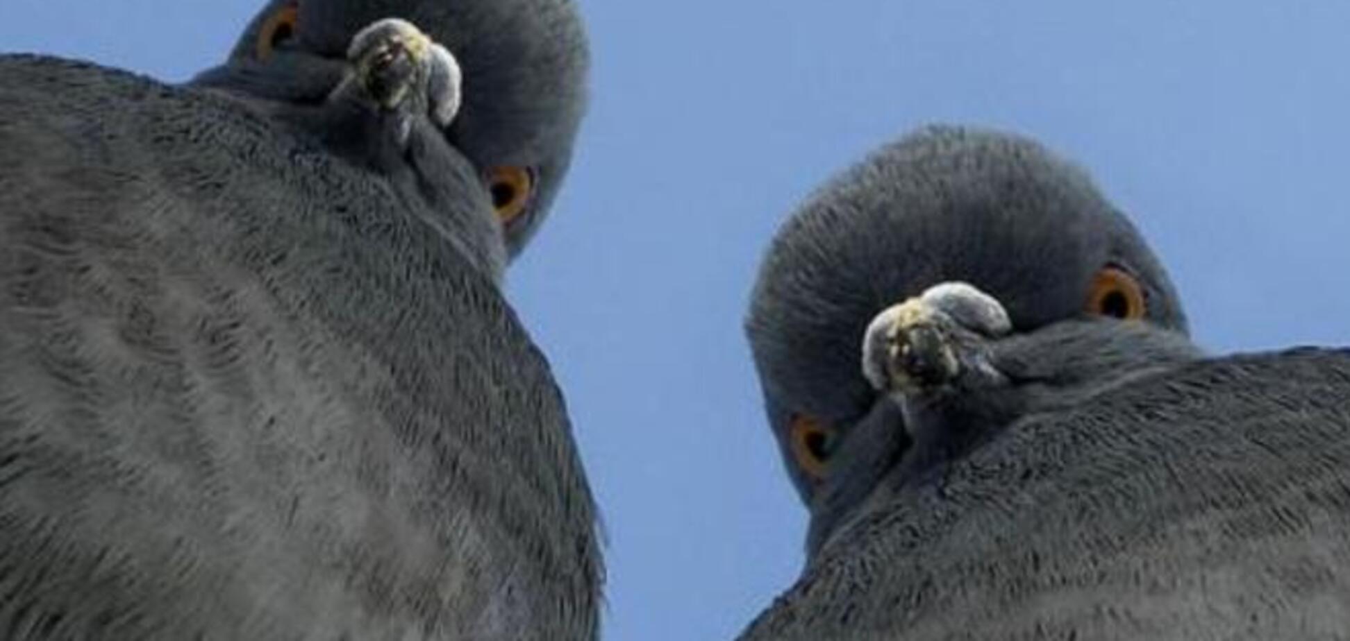 Кормить Донбасс – все равно, что кормить голубей