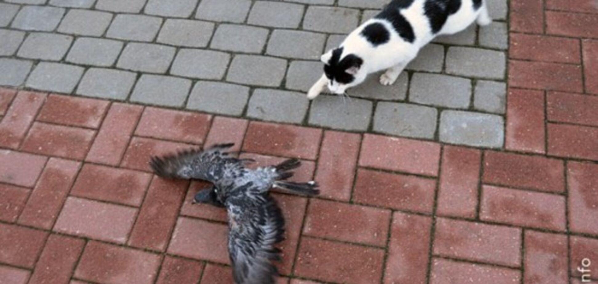 Сеть покорил забавный кот-хитрец, который охотится на голубя 'лунной походкой'