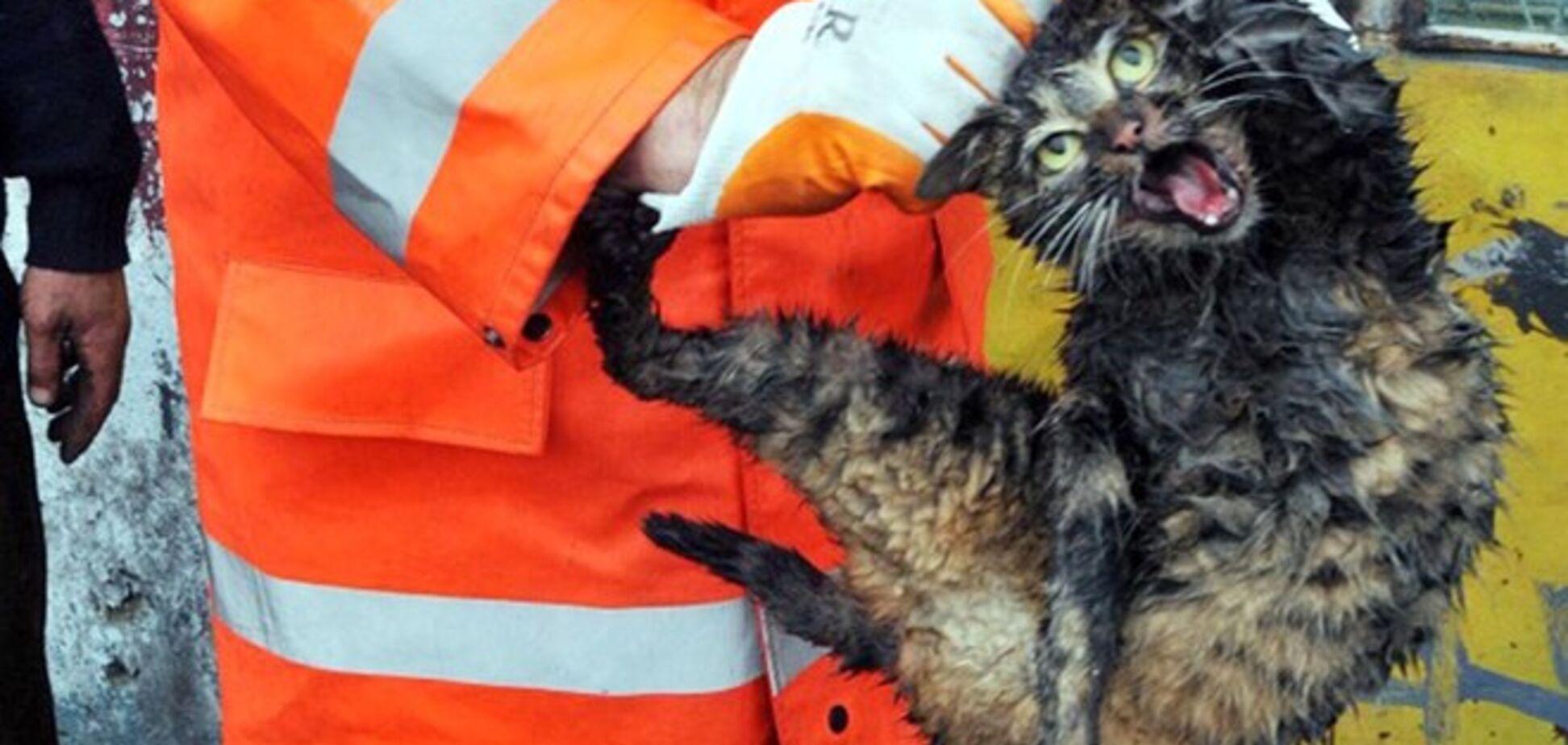 Спасенный из автомобильного двигателя кот-бродяга прославился на весь мир