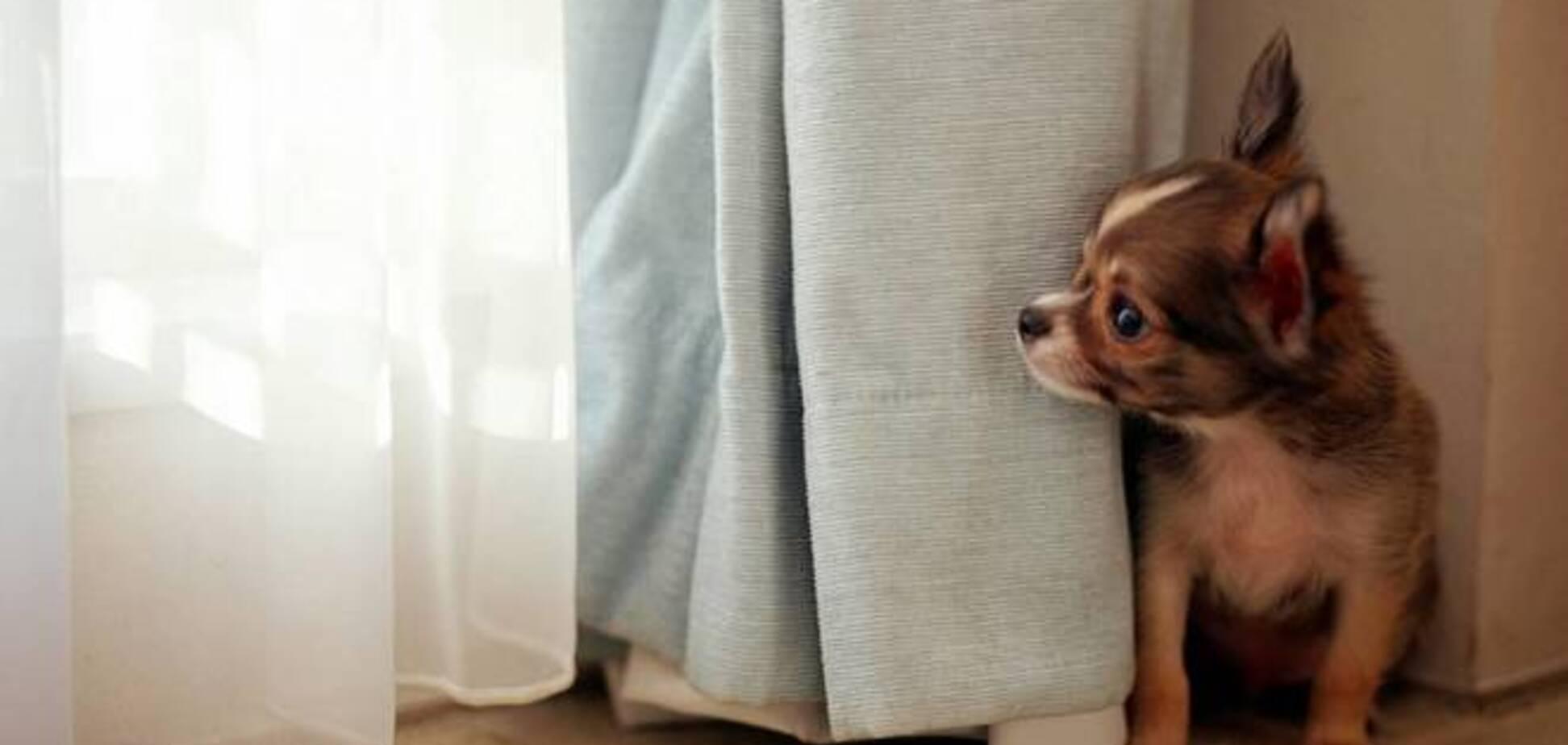 В России задумали брать налог с владельцев собак: содержание кастрированных будет в 10 раз дешевле