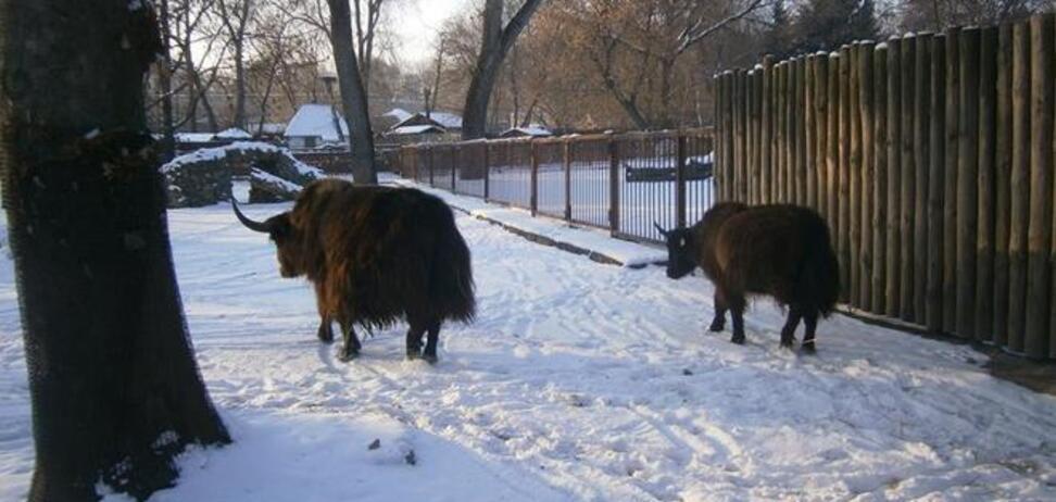 У київському зоопарку з'явилися нові тварини: опубліковано фото