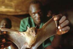 Ученые заявили, что причиной эпидемии Эбола стала игра ребенка в дупле