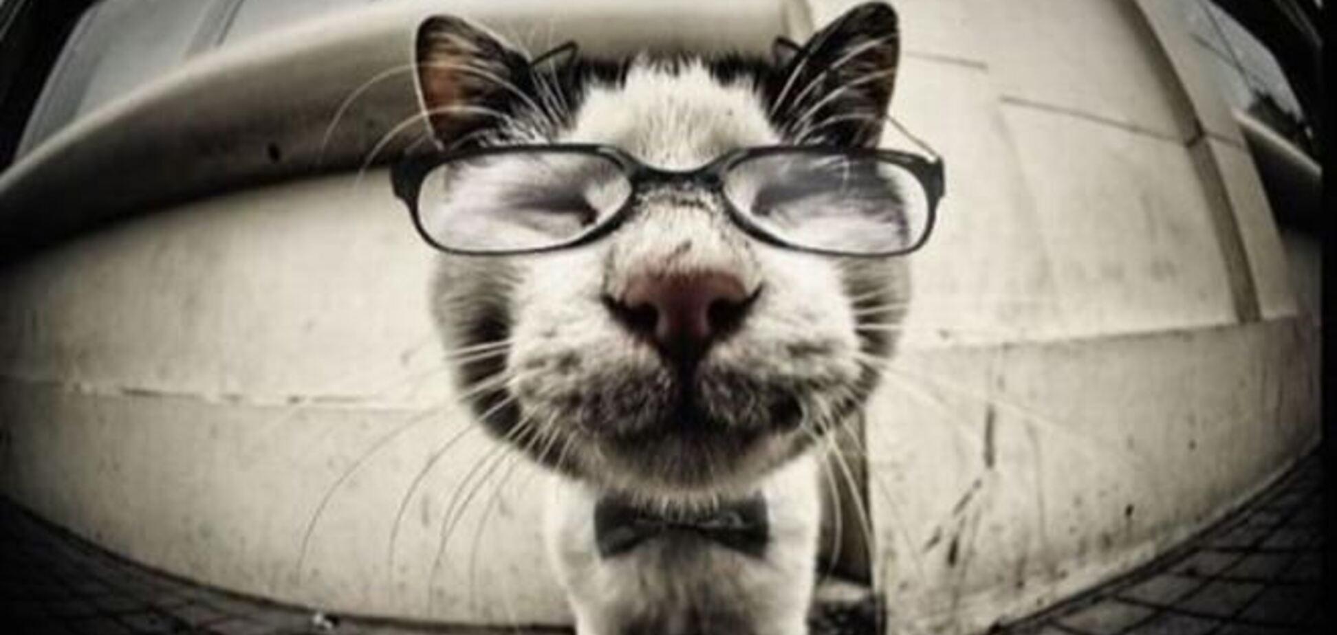 На Луганщині кішка працює вчителем