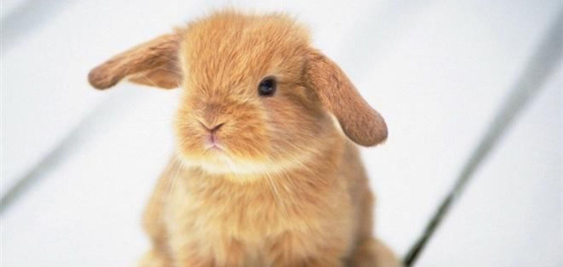 Кролики раскопали древние артефакты в Великобритании