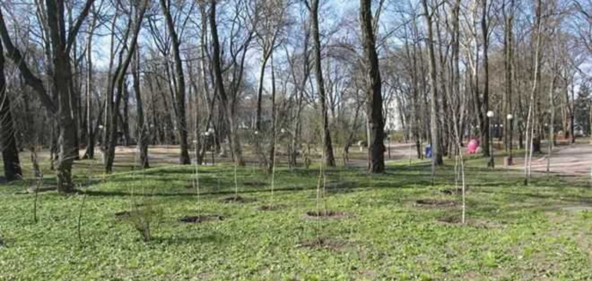 На Голосеевском проспекте полсотни деревьев изуродовали рекламой