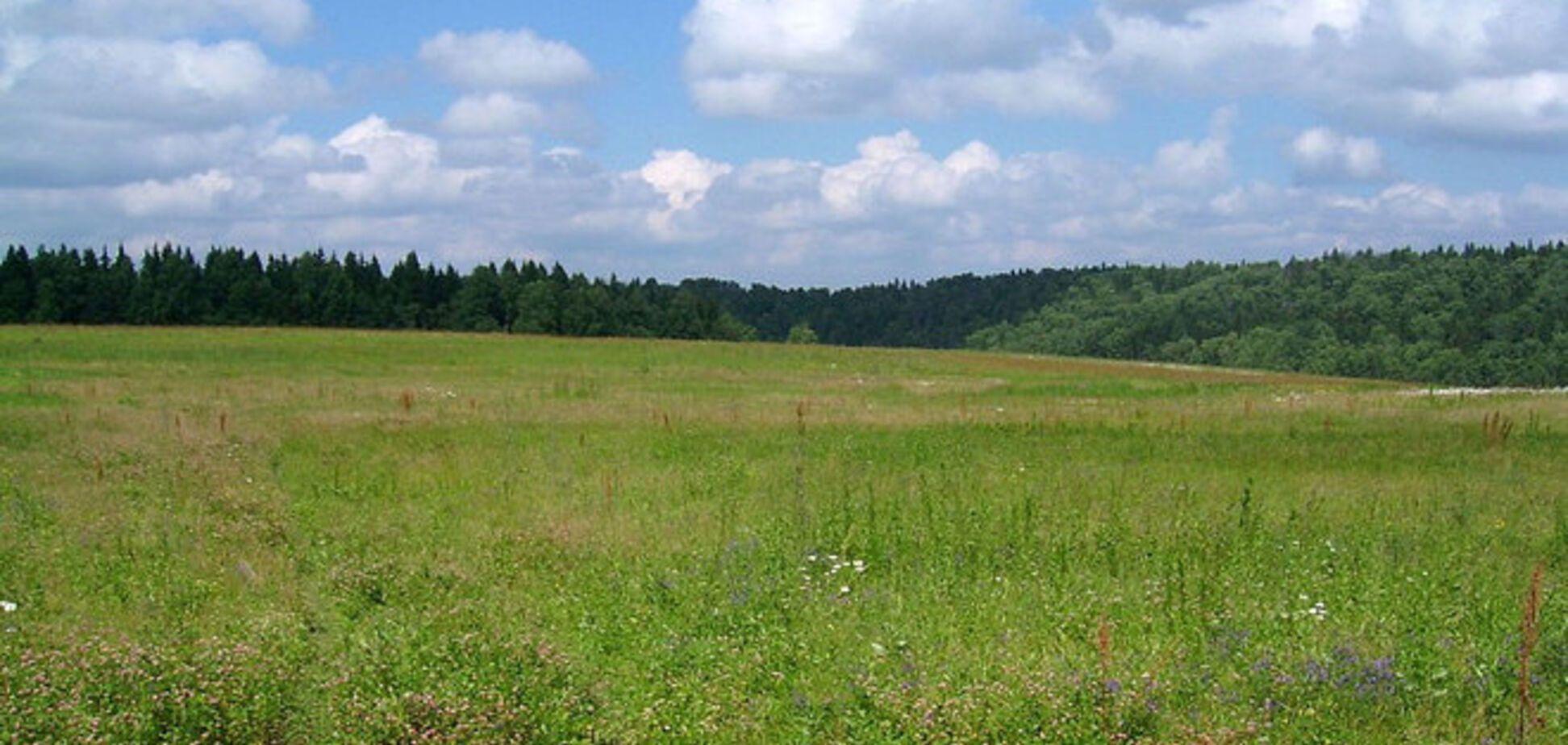 СМИ: благотворитель из фонда Бондаренко присвоил участок в 2 га у озера