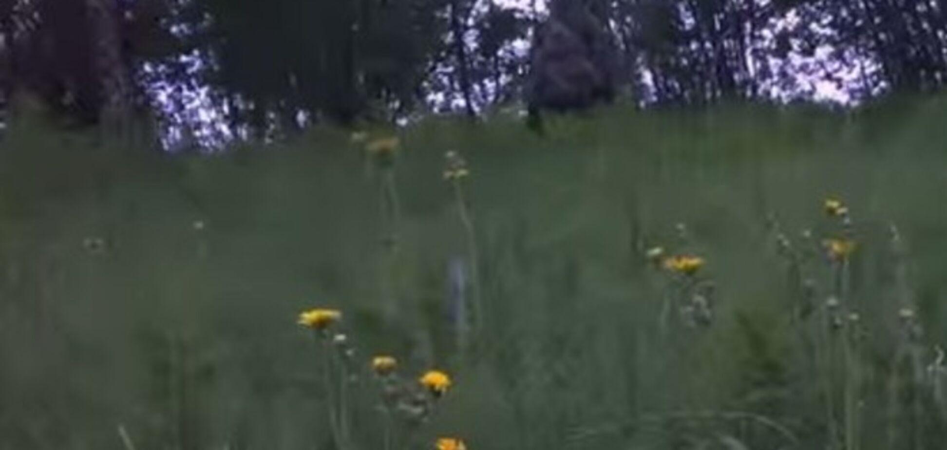 Норвезька мисливець зняв на відео 'снігової людини'