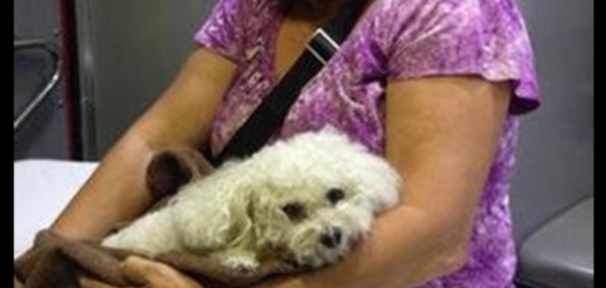 Миниатюрный пес во Флориде выжил после падения с 16-го этажа