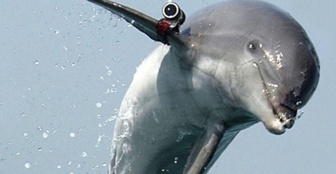 картинки боевых дельфинов сожалению, краснодарцы