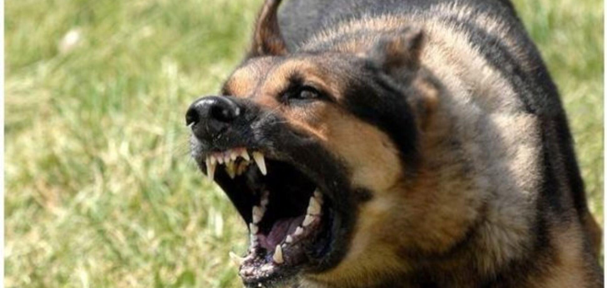 В России во дворе школы-интерната собаки насмерть загрызли девятилетнюю девочку