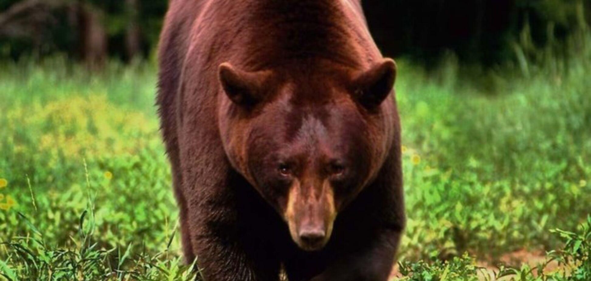 Кадыров подарил Аксенову бурого медвеженка