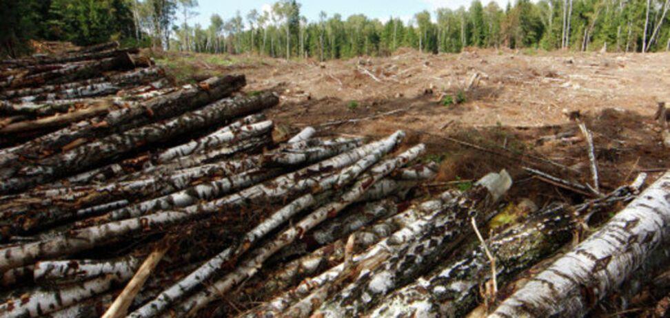 Томенко: законопроект о введении моратория на продажу леса сняли за взятку