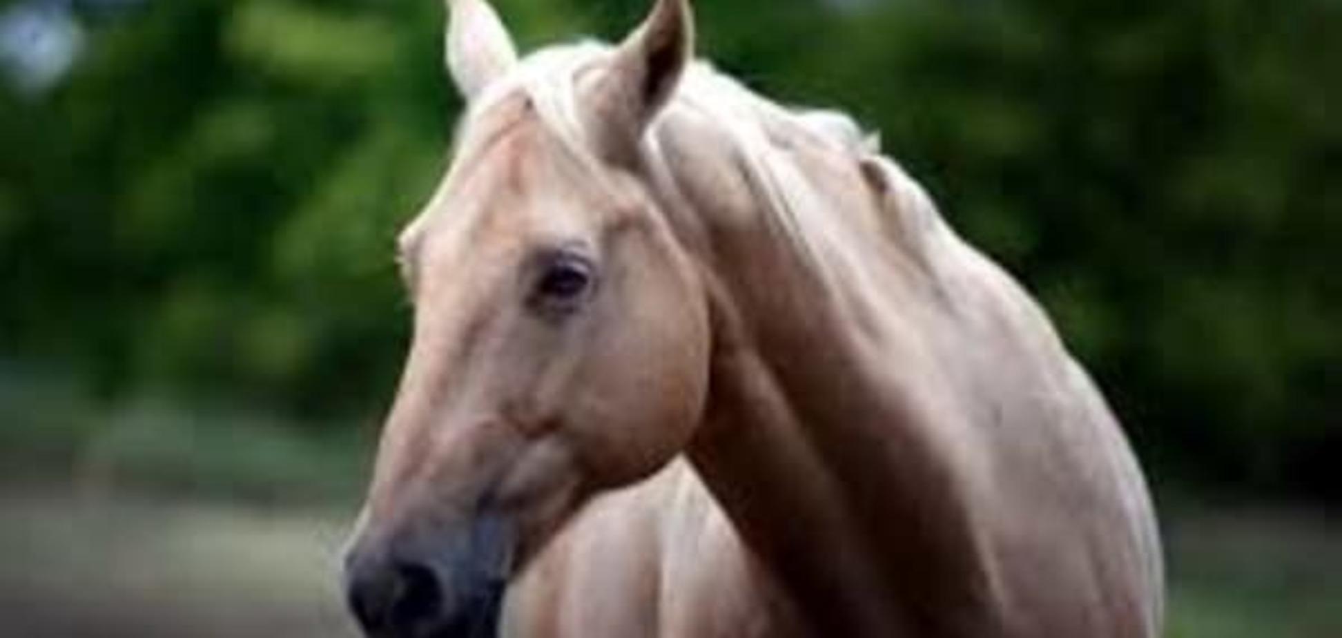 Последний барьер: умерла самая старая в мире лошадь