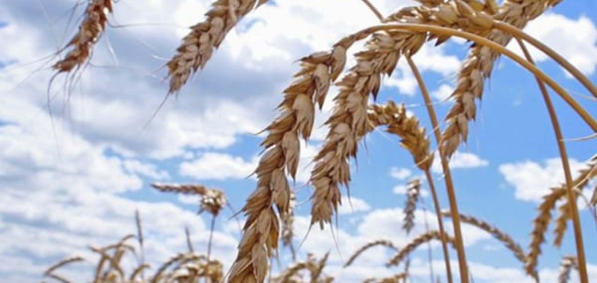Аграрная схемотехника: 9 способов дать ворам по рукам