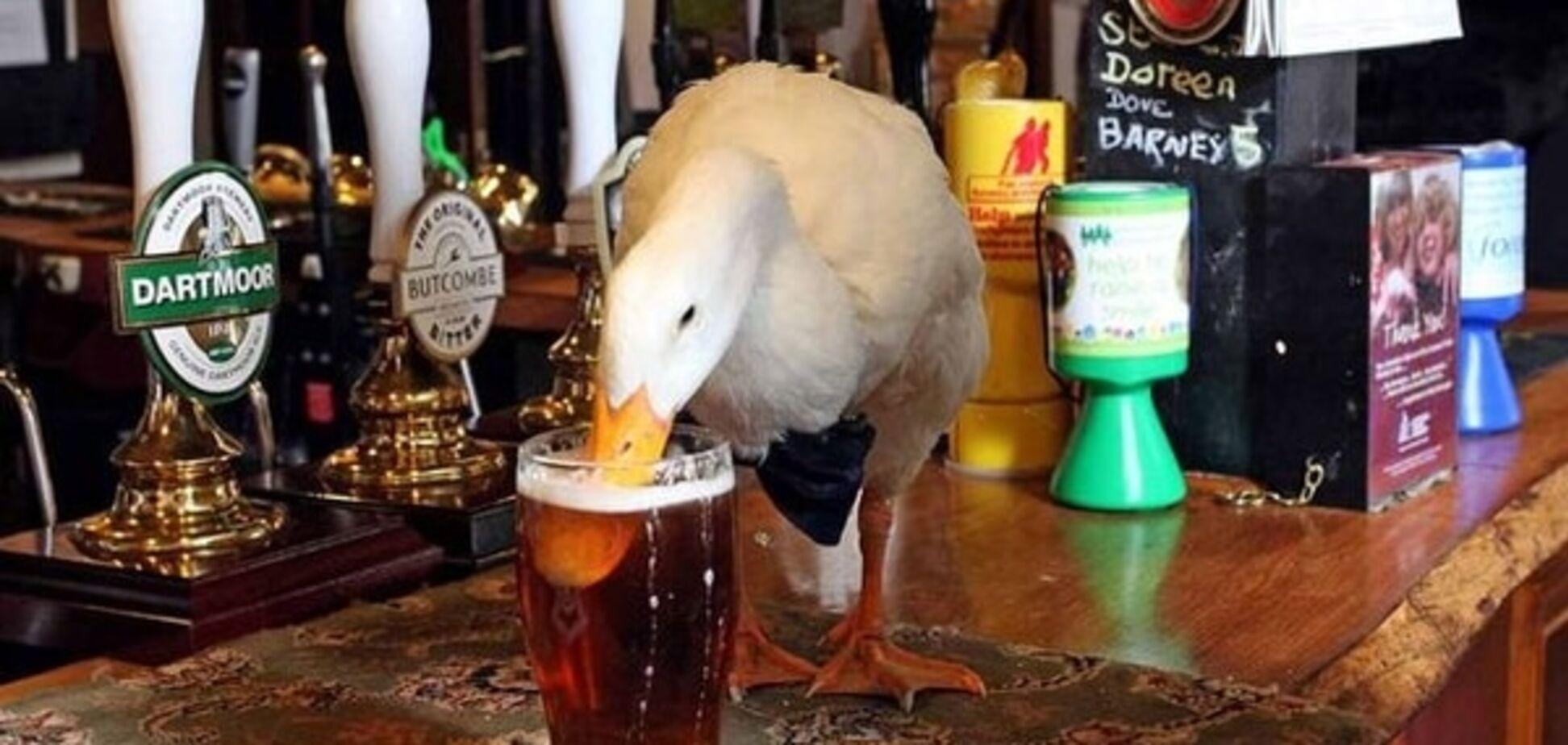 И такое бывает: в британском баре пьяная утка подралась с собакой