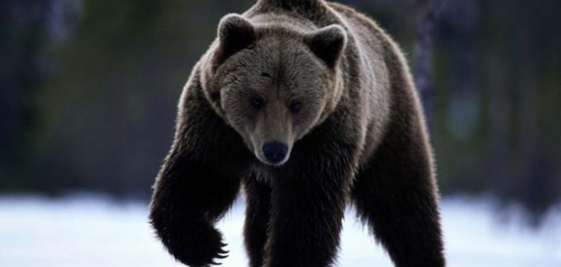 В России в детском саду убили медведя: опубликовано видео