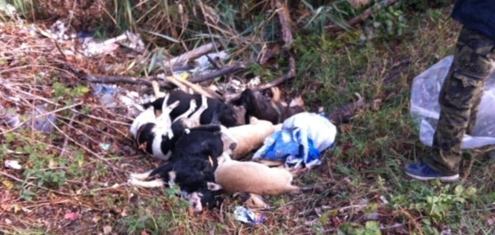 У Києві міліція зайнялася масовим вбивством собак