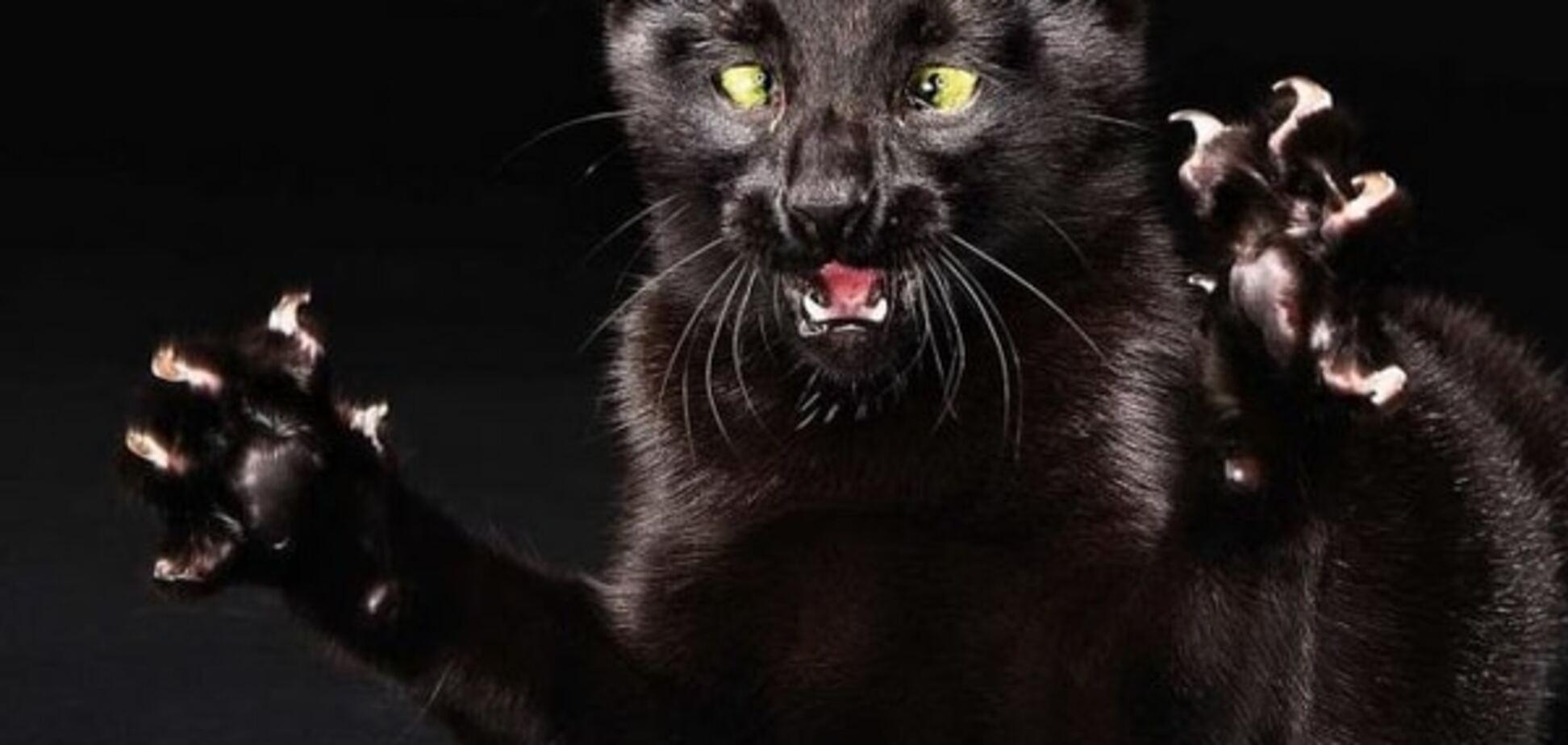 Обережно, сказ! У Кіровограді агресивний кіт напав на 11 осіб