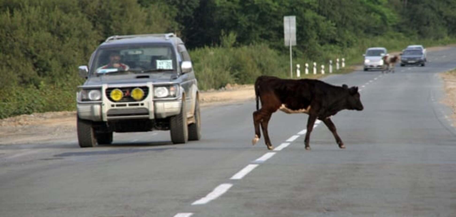 Баран нашел барана: в России водитель сбил 45 животных