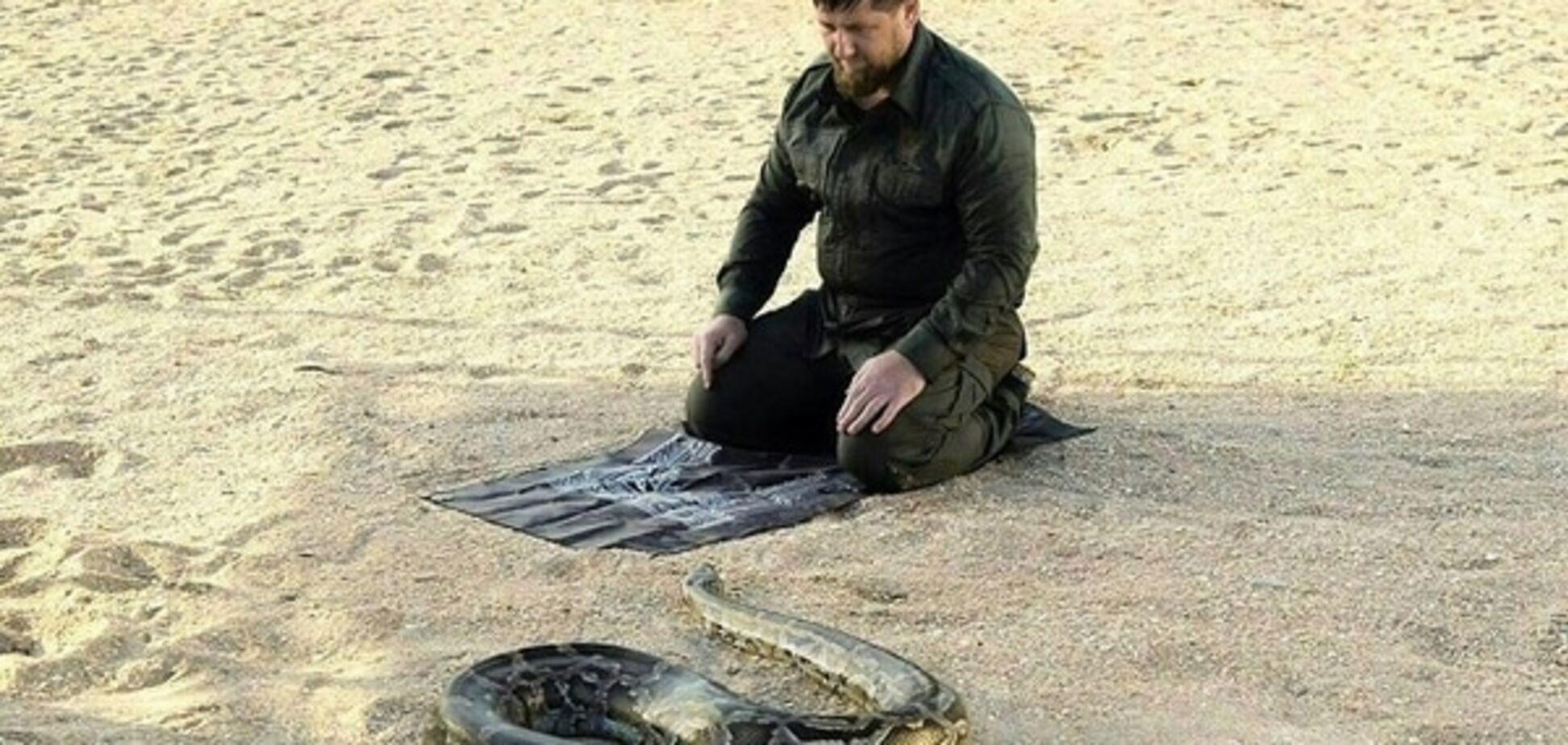 Подвиг Рамзана: Кадиров похвалився фото, де він 'гіпнотизує' величезного пітона