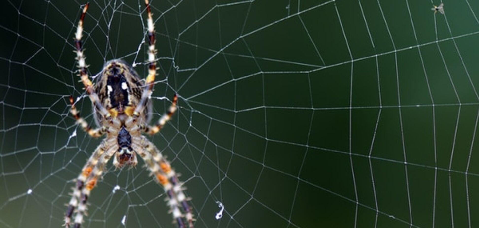 У США з'явився величезний павуковий міст: відеофакт