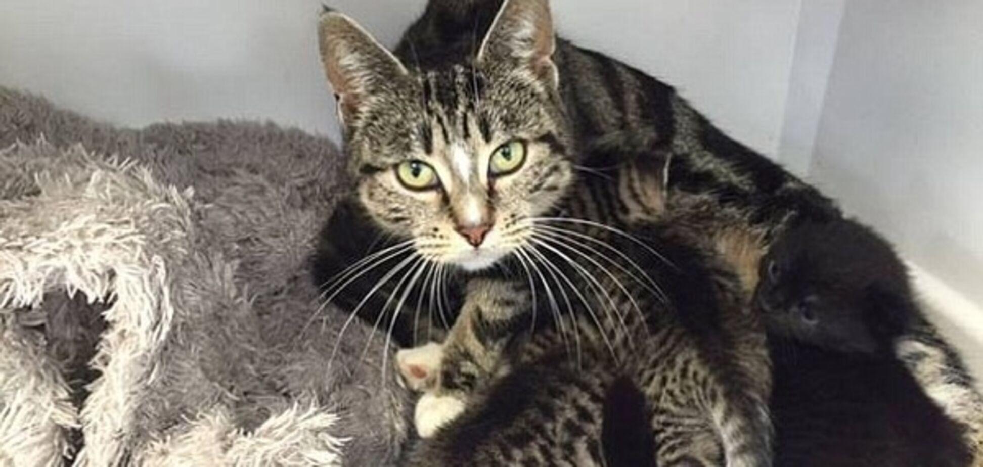 Кішка 'атакувала' клініку, щоб врятувати своїх кошенят