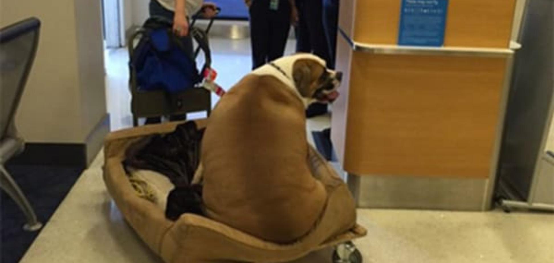 Королівське ставлення до пса, що поглпдшав, 'підірвало' інтернет: фотофакт