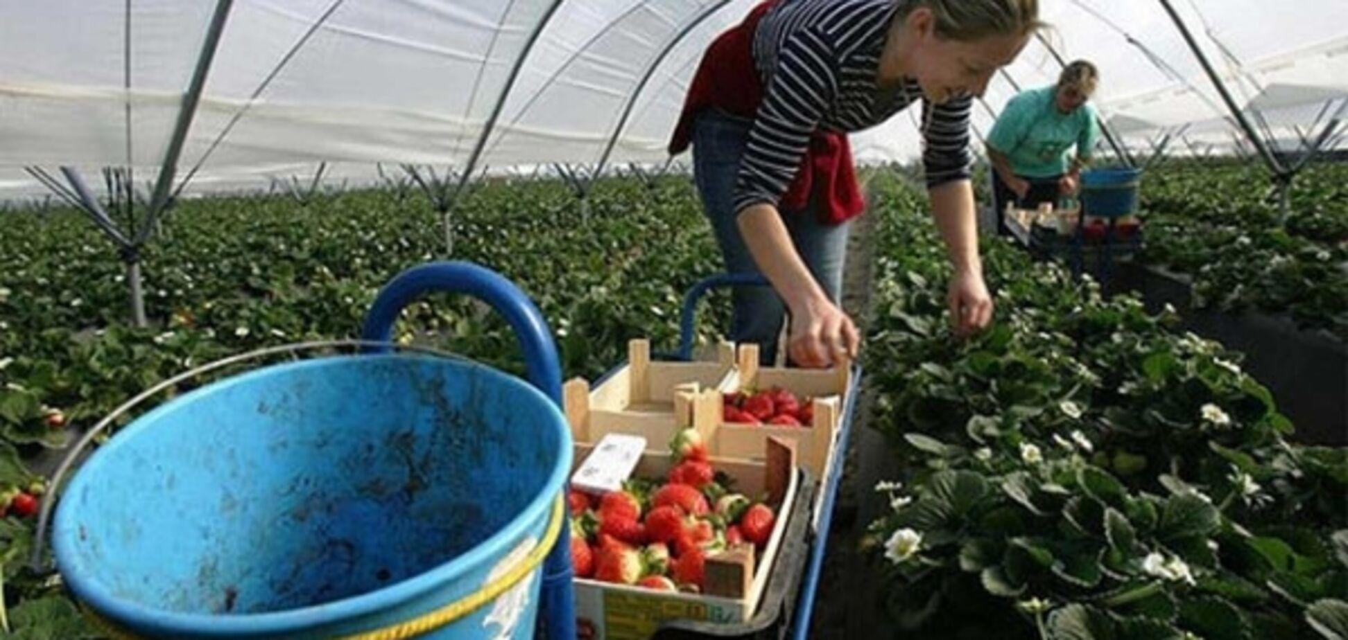 На Харьковщине выявили 3,5 тыс. работников-'нелегалов'