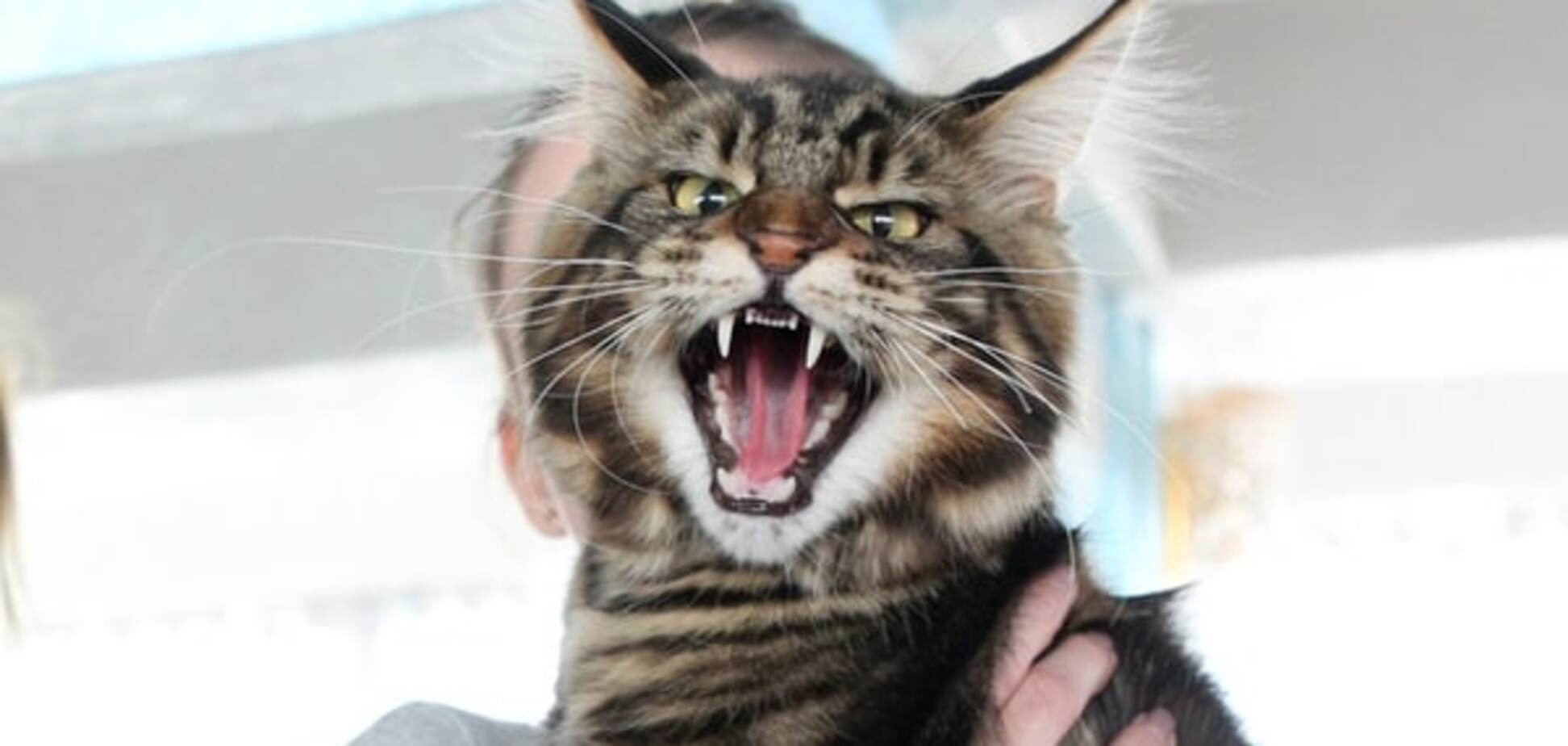 Мохнатые властелины: в США коты захватили дома своих хозяев