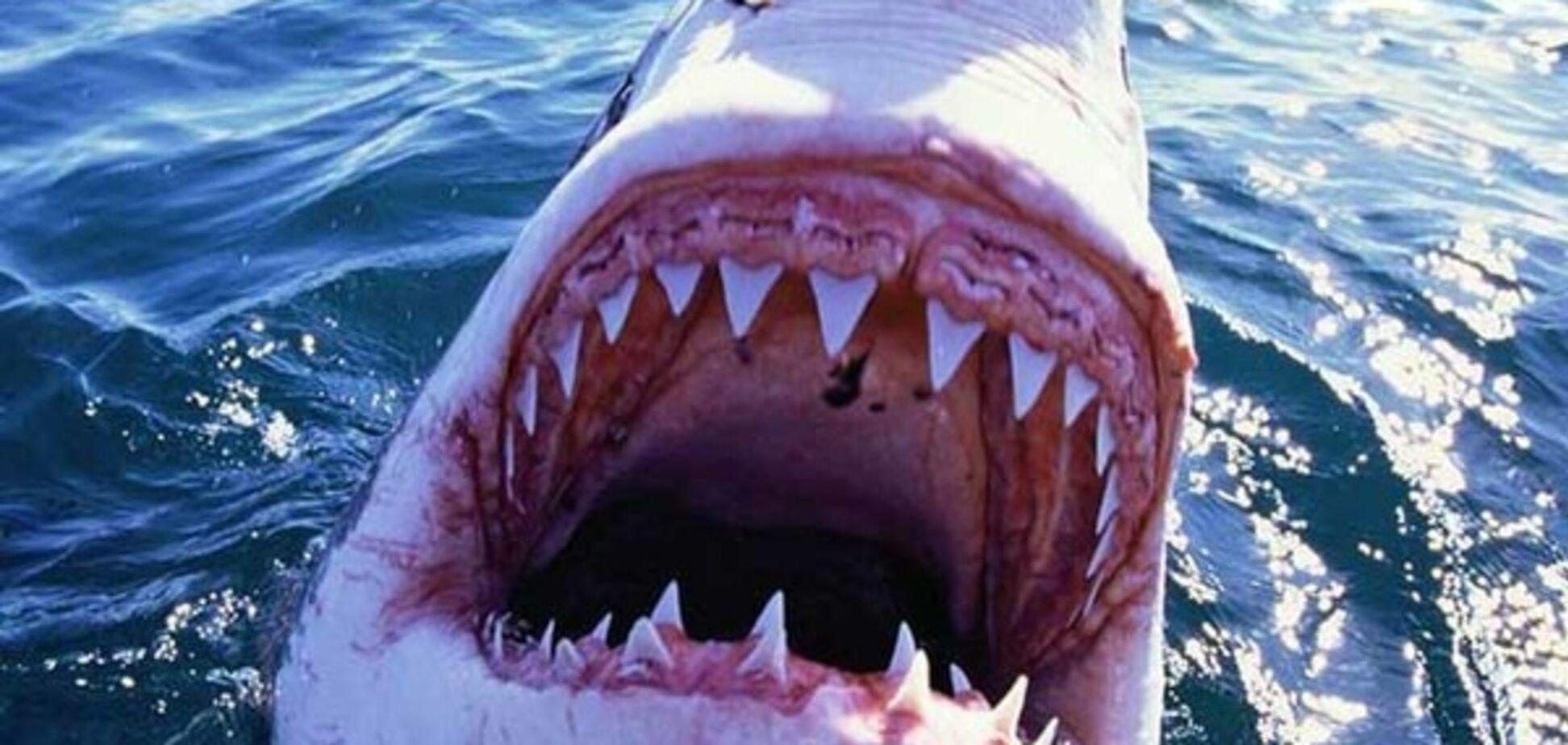 Напад акули врятував життя американцю, хворому на рак