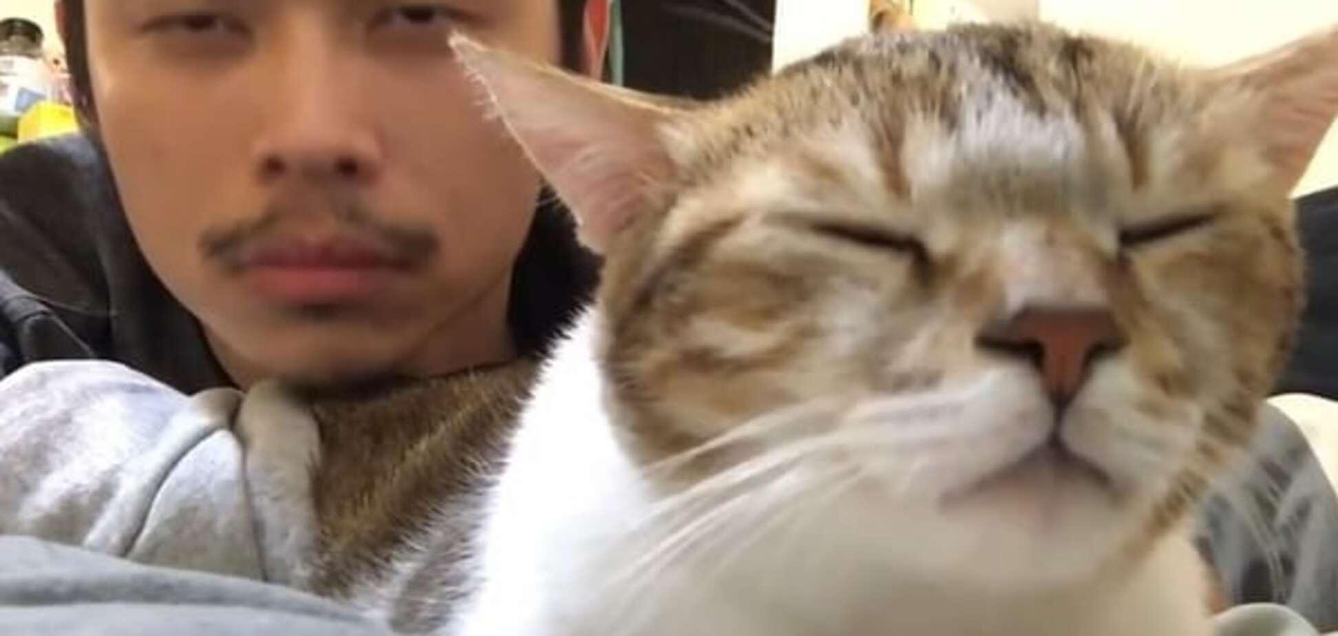 Найден кот с идеальным чувством ритма: видеофакт