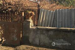 Колонія Росії: як живуть села невизнаного Придністров'я