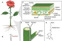 Из растений в киборги: ученые смогли вживить мискросхемы в живую розу