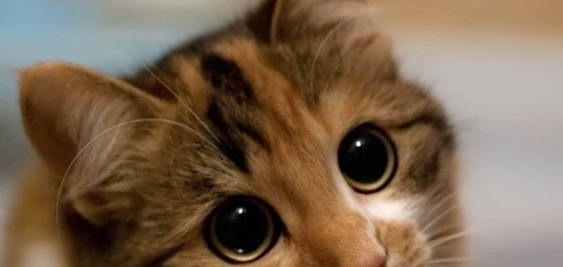 Ненависть к котикам: за что Новая Зеландия невзлюбила милых пушистиков