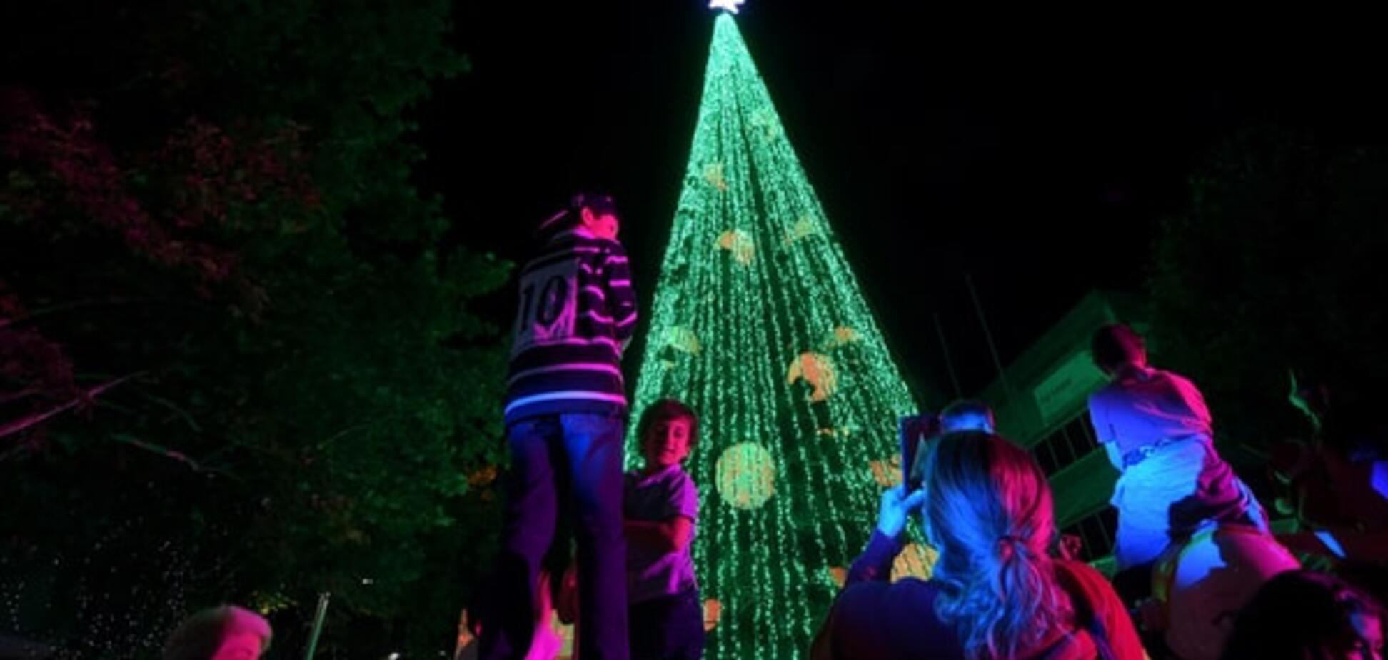 В Австралии установили самую яркую новогоднюю елку: фото красавицы