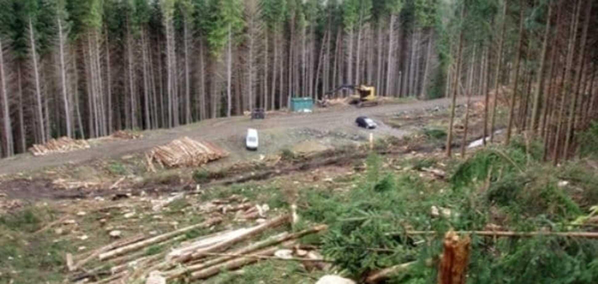 Експерт розповів, як Кабмін Яценюка 'кришує' вирубку лісів у Карпатах