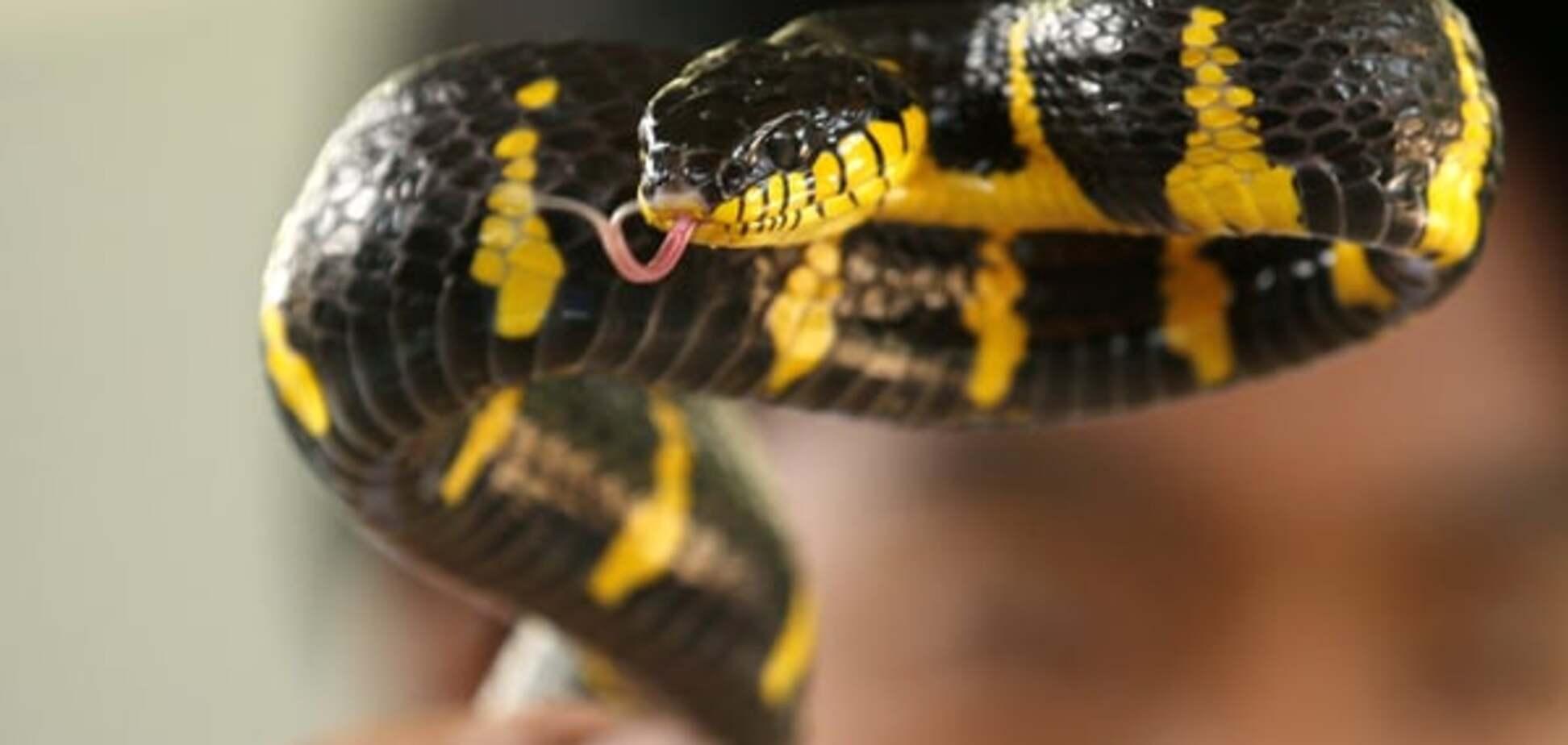 В Бразилии полуторагодовалый малыш спас семью, убив ядовитую змею
