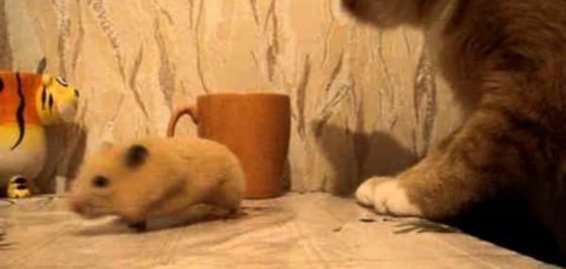Жадный хомяк, спрятавший сало от кота, стал звездой сети
