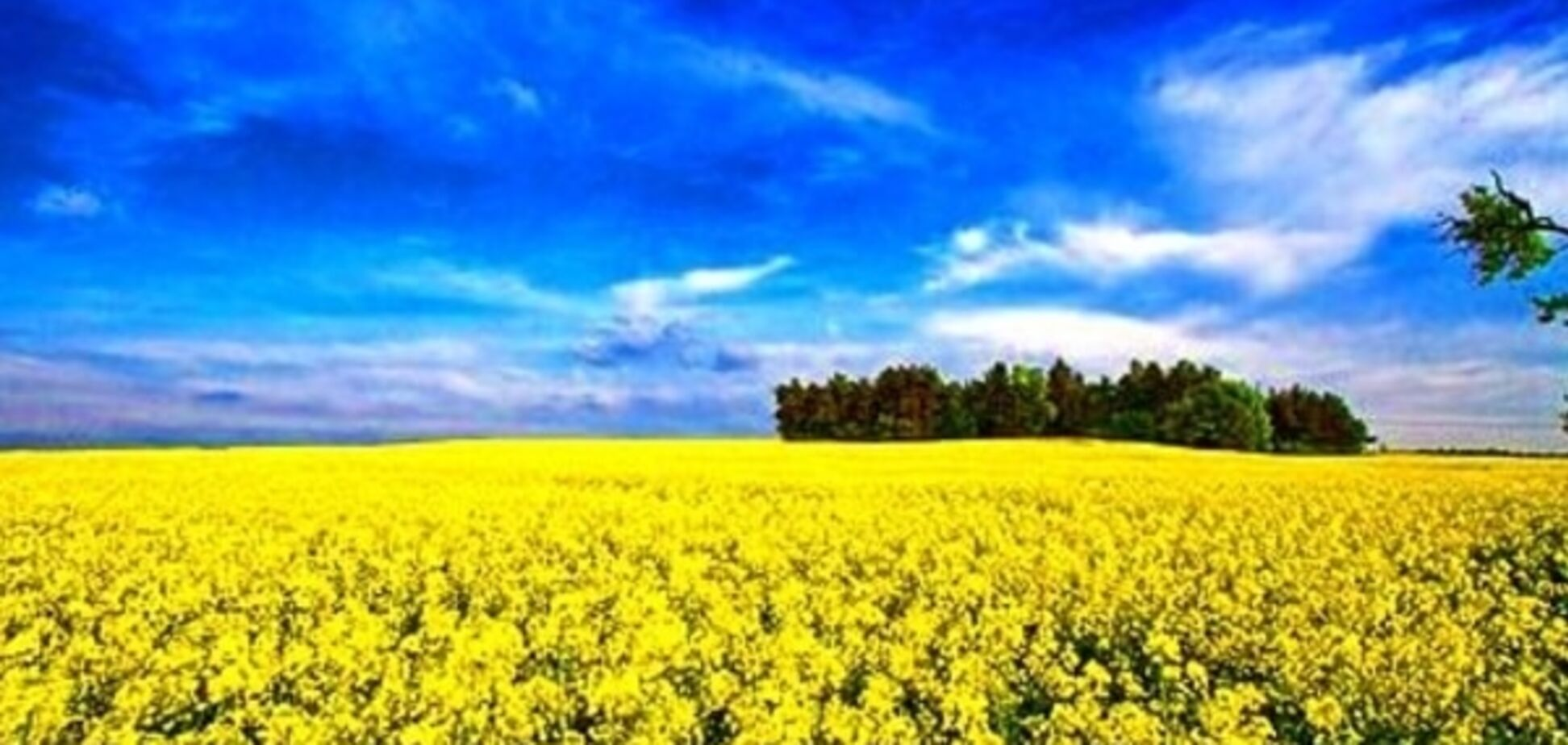 Українська мрія