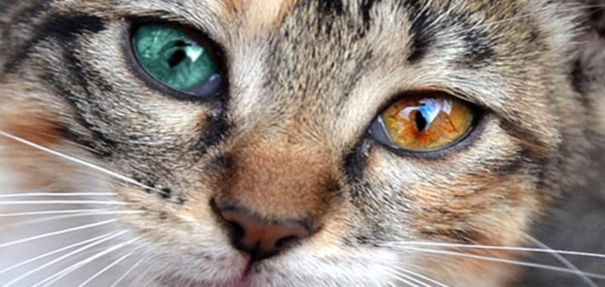 Чтоб я так жил: в Италии бродячие коты получили квартиру за €230 тыс.