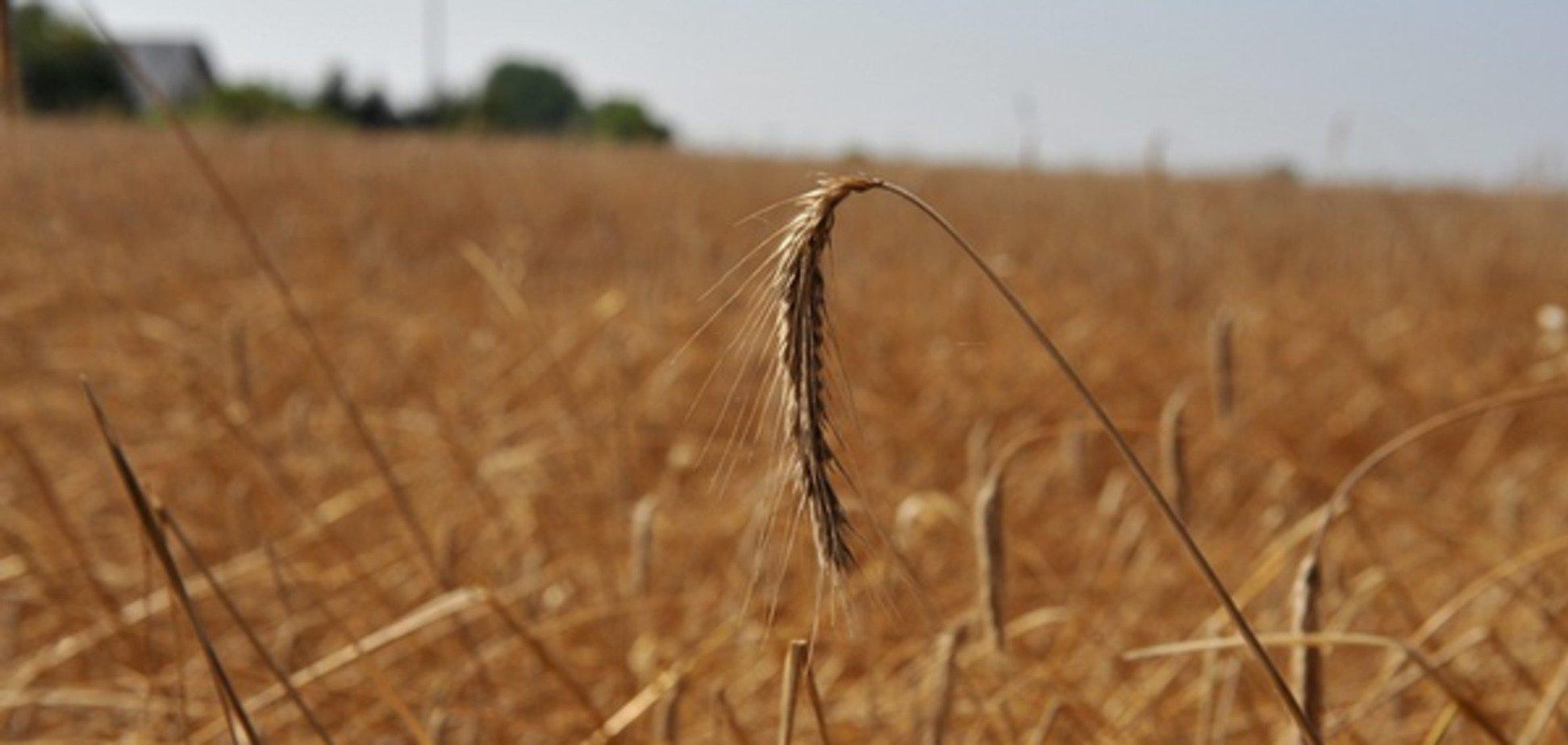Схаменулися: Росія 'ні в якому разі' не зупинить поставки зерна в Туреччину